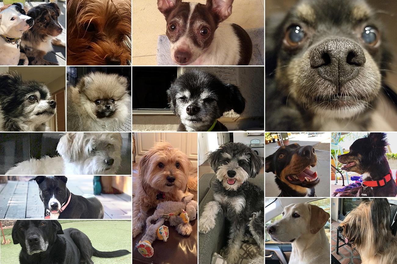 Dog Day Blog image